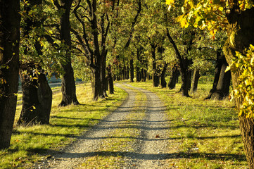Droga wśród starych drzew