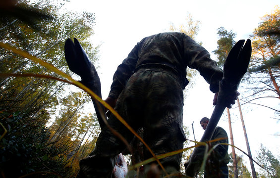 Belarusian hunters cut the killed elk as they take part in a hunting on wild ungulates near the village of Myshanka