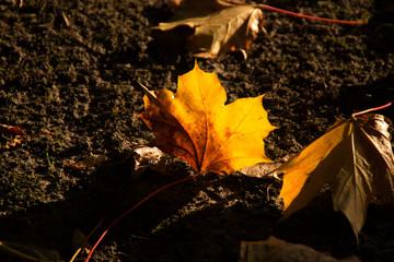 Ein Kastanienblatt im Herbst