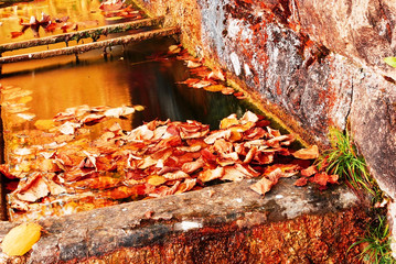 the leaves cover the water of the mountain fountain
