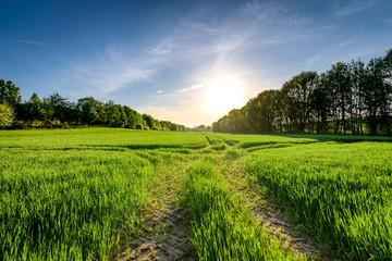 Frühlingslandschaft in der Uckermark