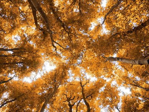 Herbst Baumkronen