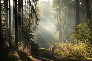 Dirt road through a foggy autumn forest at dawn