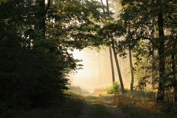 Dirt road through the forest at dawn