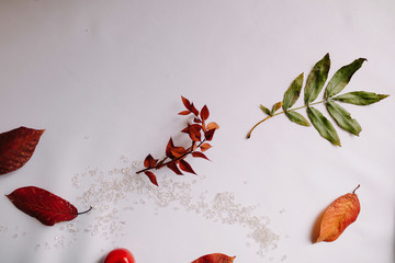Autumn fall flat lay composition isolated on white background.