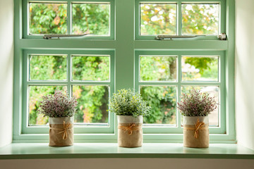 Green cottage window, with plants in pots in front