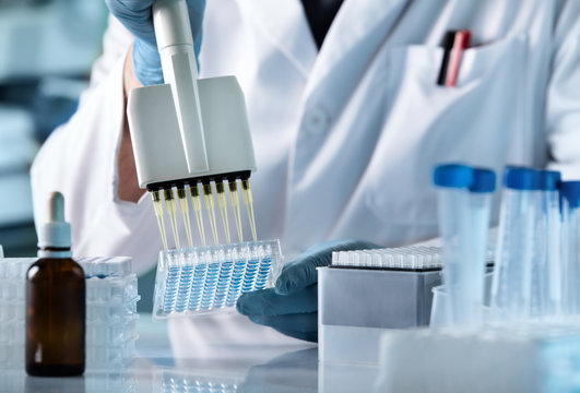 research technician with multipipette in genetic laboratory / hands of scientist working with multichannel pipette and multi well plates