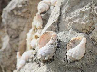Caracolas decorativas en las rocas de la playa.