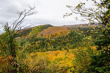 autumn landscape with trees minnesota