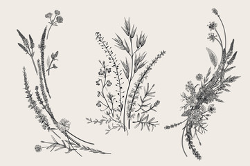 Summer floral composition. Design elements. Flowers and plants of fields and forests. Vector vintage botanical illustration. Black and white