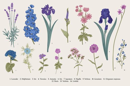 Summertime. Garden flowers. Vector vintage botanical illustration.
