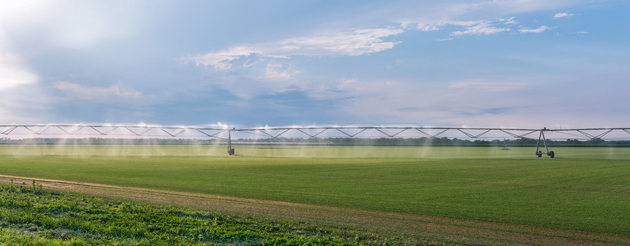 Panorama of the automated farming irrigation sprinklers system on cultivated agricultural landscape field. Summer sunset