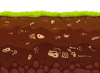 Archeology bones in soil layers. Buried fossil animals, dinosaur skeleton bone in dirt and underground clay layer vector illustration