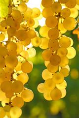 Détail grappe de raisin blanc