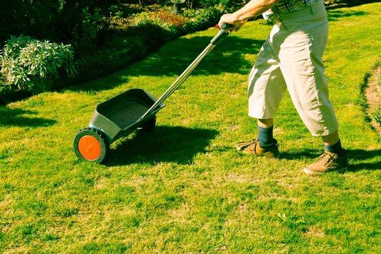 Mann düngt den Rasen