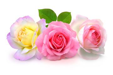 Blumen 927