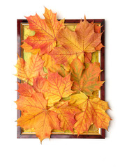 Autumn decoration of maple leaves in picture frame isolated on white background. Handmade colorful autumn composition in frame.