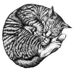 Cat hand drawing ink painting