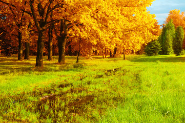 Autumn landscape. Golden trees and flooded lawn in the autumn forest
