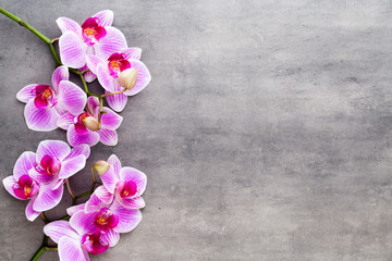 Deurstickers Orchidee Beauty orchid on a gray background. Spa scene.