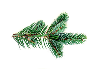 Green  pine branch isolated on white background. Fir tree branch, detailed image