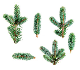 Set of fir branches isolated on white background. Pine branch, confier tree.  Christmas and New Year Symbol