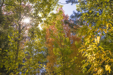 Bright autumn forest on sunny day
