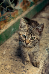 Lovely cat as domestic animal in view