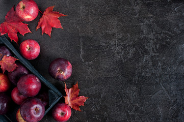 Black background with autumn red apples and leaves