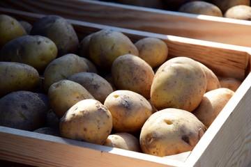 Erntefrische Kartoffeln, Verkauf, Marktstand