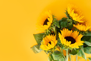 Sunflower fresh flowers on yellow background with copy space