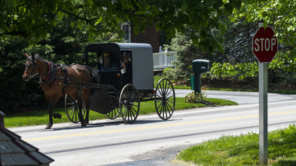 Amish Horse and Buggy going down the Road