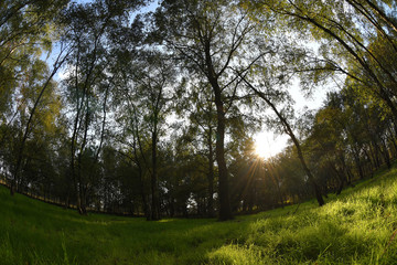 Herbstwald im Sonnenuntergang