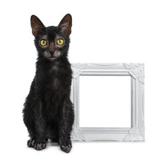Adorable black Lykoi cat kitten girl sitting beside white empty photo frame looking straight at camera with bright yellow eyes, isolated on white background