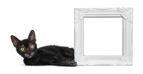 Adorable black Lykoi cat kitten girl laying beside white empty photo frame looking straight in lens with bright yellow eyes, isolated on white background