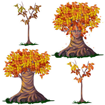 Set fantasy of deciduous trees in the fall isolated on white background. Vector cartoon close-up illustration.