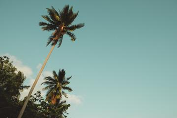 Palm tree over sky background.