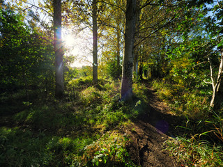 Early Autumn countryside morning,Northern Ireland