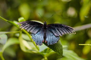Butterflies of the Malahide Castle Gardens