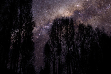 Milky way above birch forest. Treetops and branches blurred by the wind.