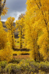 """Pure Golden Trees"""
