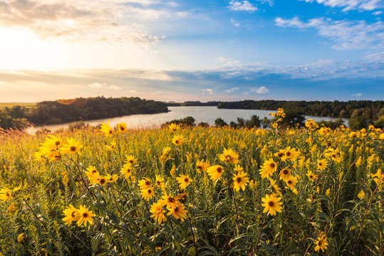 Field of flowers by the lake