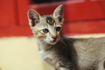 Kitten In Action