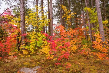 Colorful fall foliage in New England