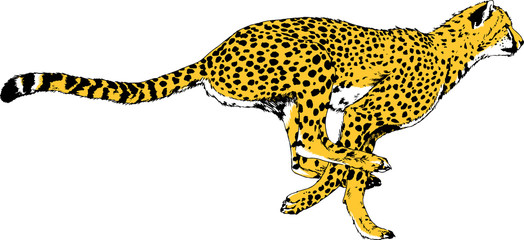 running Cheetah hand-drawn with ink on white background logo tattoo