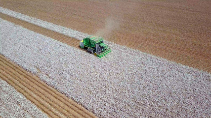 Large six row Baler Cotton picker working in a Cotton field - Aerial image