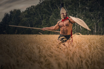 Ancient Spartan warrior in the helm and spear in hand is fighting in the wheat field background.