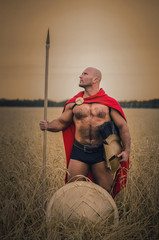 Spartan ancient warrior in the helm holding a spear in hand wearing in the red cloak standing in the wheat field. Win the war concept.