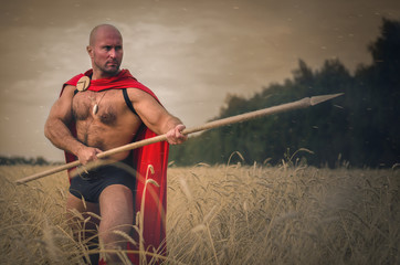 Spartan ancient warrior in the helm holding a spear in hand wearing in the red cloak is standing in the wheat field.