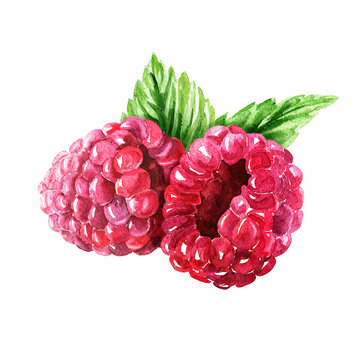 Hand drawn watercolor raspberry composition with green leaves, delicious food art isolated on white background.